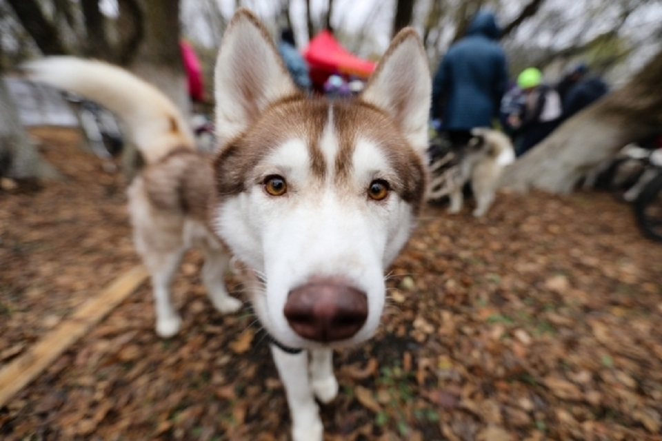 Cервис по поиску потерявшихся домашних животных запустили в Москве