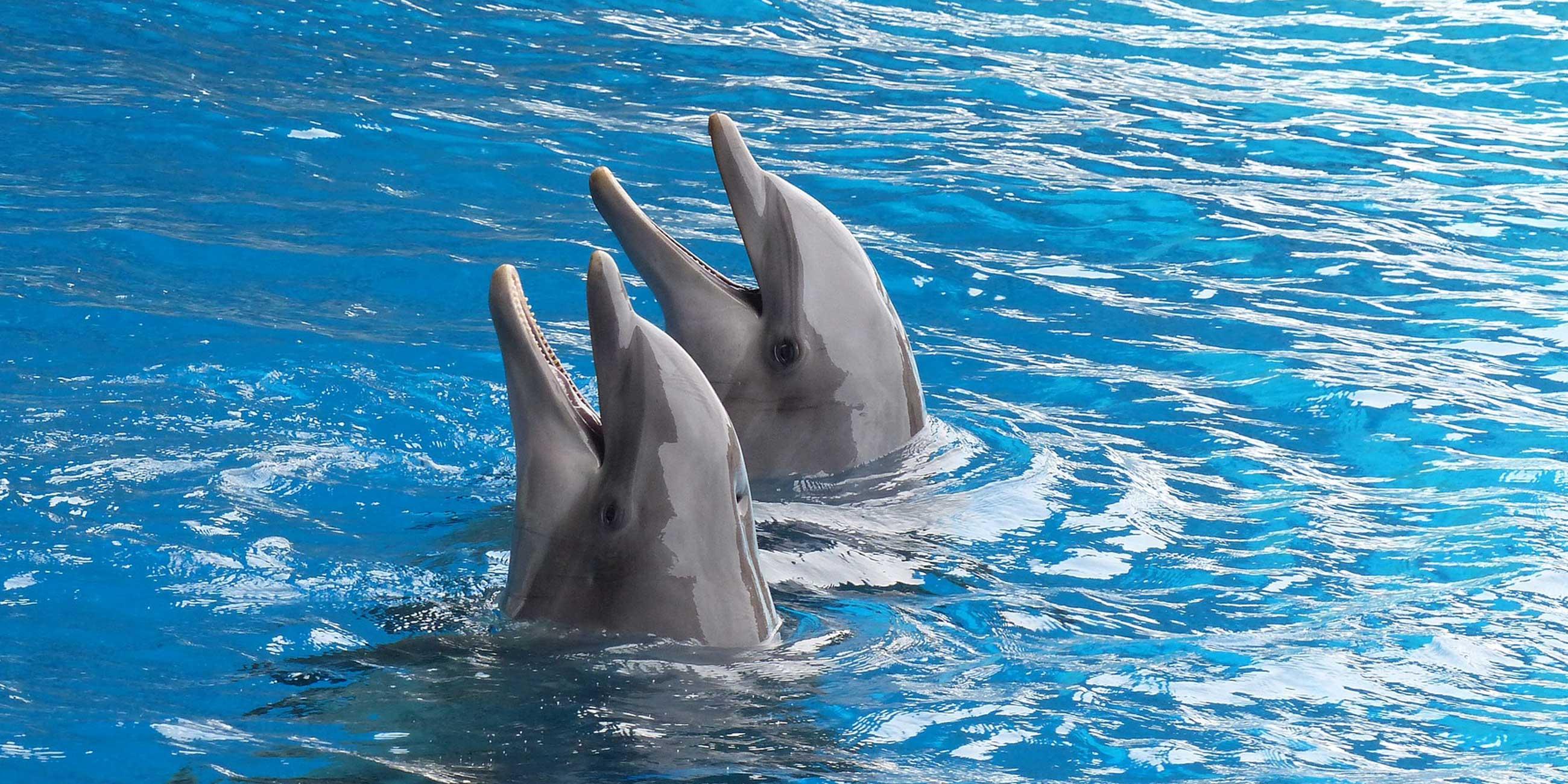 Евпаторийский дельфинарий считается самым большим в Крыму.