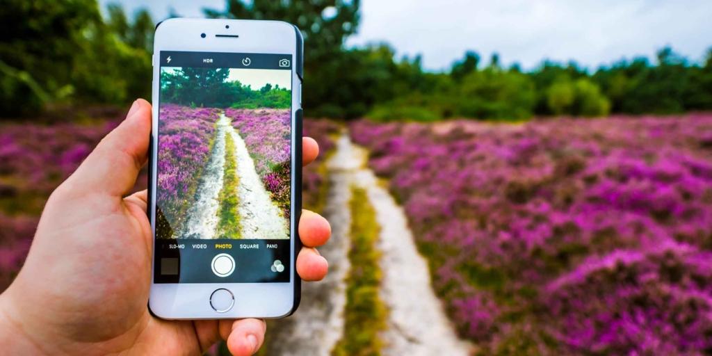 лавандовое поле в объективе камеры на телефоне